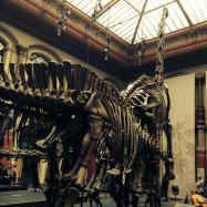 Berlin Natural History Museum 2014
